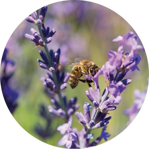 Living Libations - Lavender Essential Oil