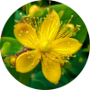 Living Libations Saint Johnswort Essential Oil