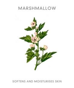 Abloom marshmallow