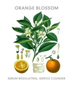 Abloom skincare - Organic Purifying Cleanser 2